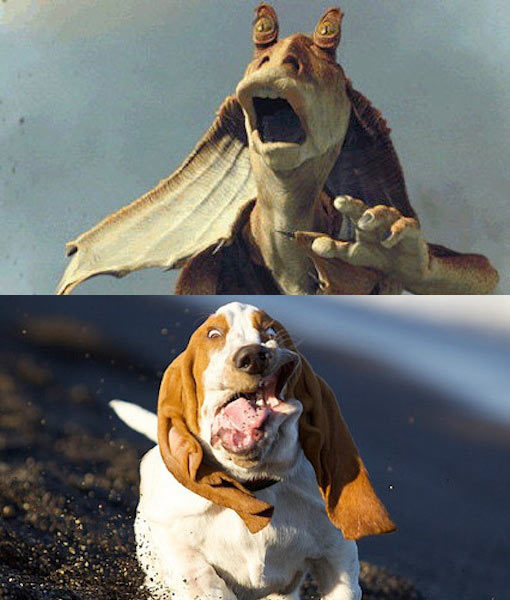 Animals Who Unknowingly Look Like Star Wars Characters