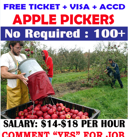 Apple Pickers Hiring in Canada
