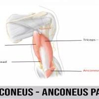 лакътен мускул | Anconeus Pain