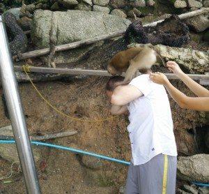 Pet Monkey :)