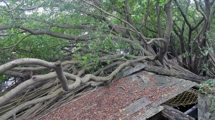 Anping Treehouse Roof