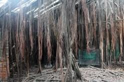 Anping Treehouse Interior