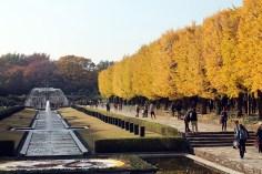Autumn Leaves in Tokyo Japan