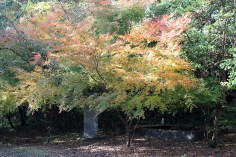 Kouyou in Hita Japan