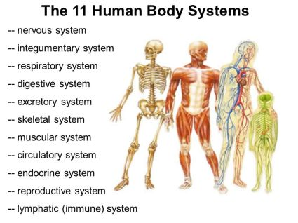 bodysystems