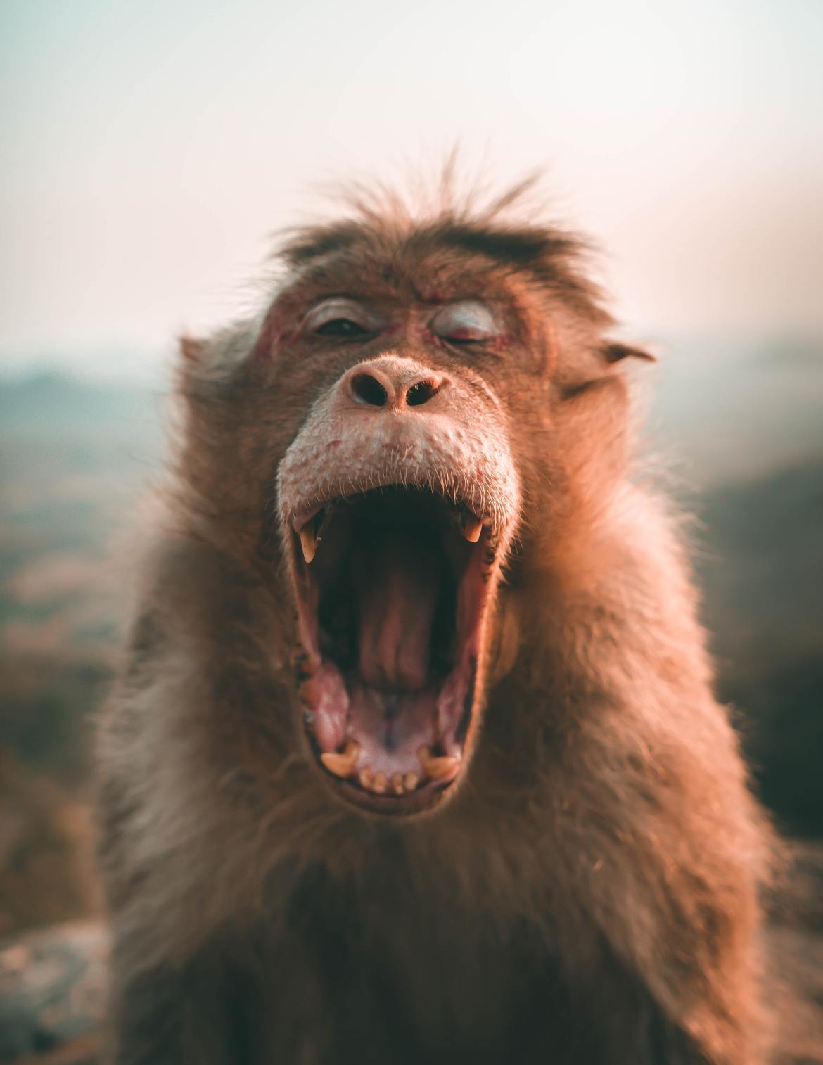 animal-animal-photography-ape-2213575