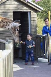 hungry hungry...giraffe
