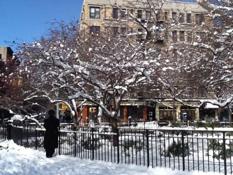Snowy Bare Trees