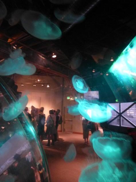 Jellyfish Ring Tank