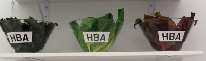Hood By Air Salad Bowl