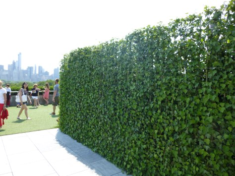 Dan Graham Installation Hedge
