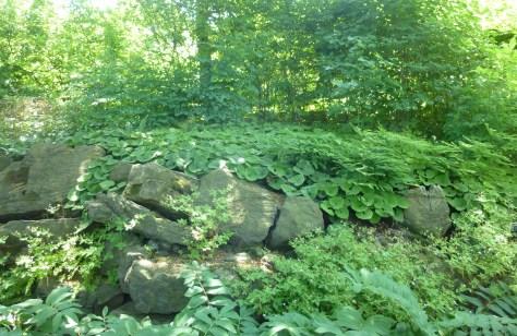 Limestone Ledge