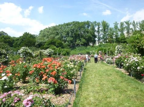 Rose Garden Full View