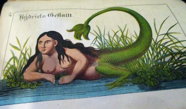 Magia Naturalis Snake Lady