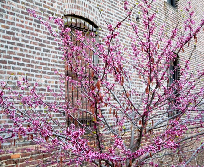 Purple Tree With Brick Detail