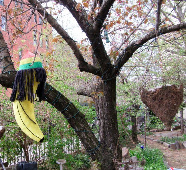 Rasta Banana