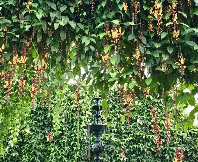 Hanging Orchids in Fountain Room