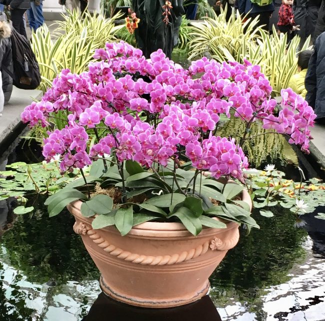 Purple Planter in Fountain Room
