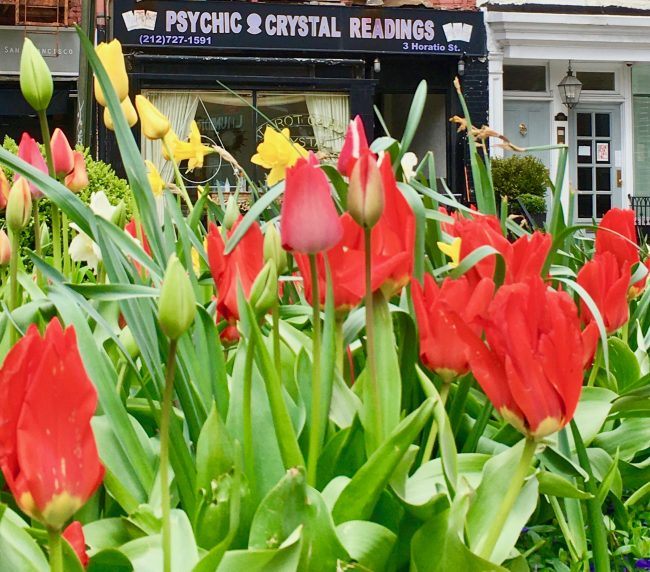 tulips and psychic photo by gail worley