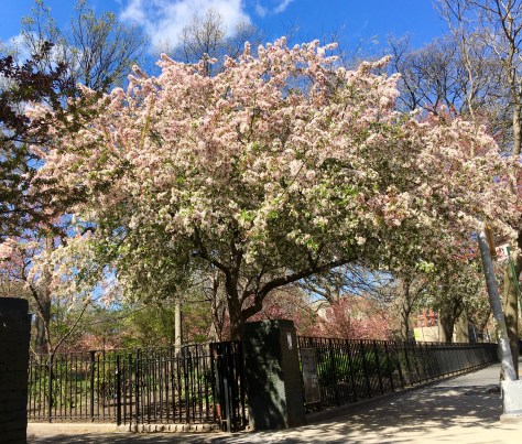 flowering tree photo by gail worley