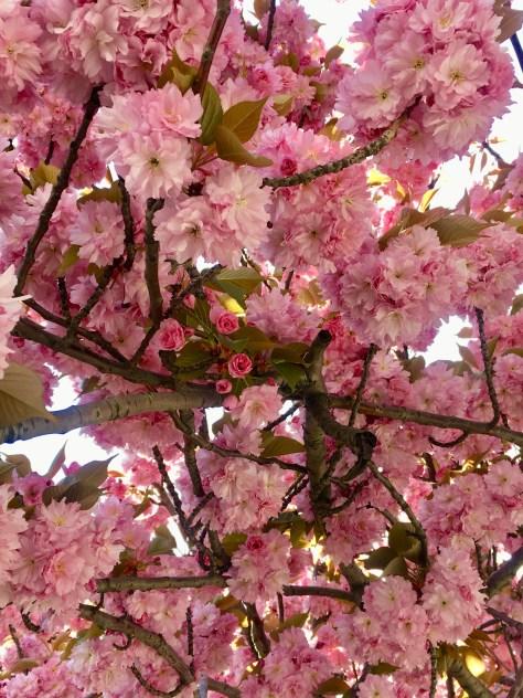 florabunda photo by gail worley