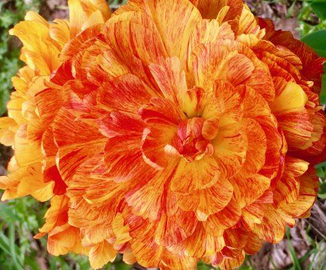 orange flower photo by gail worley