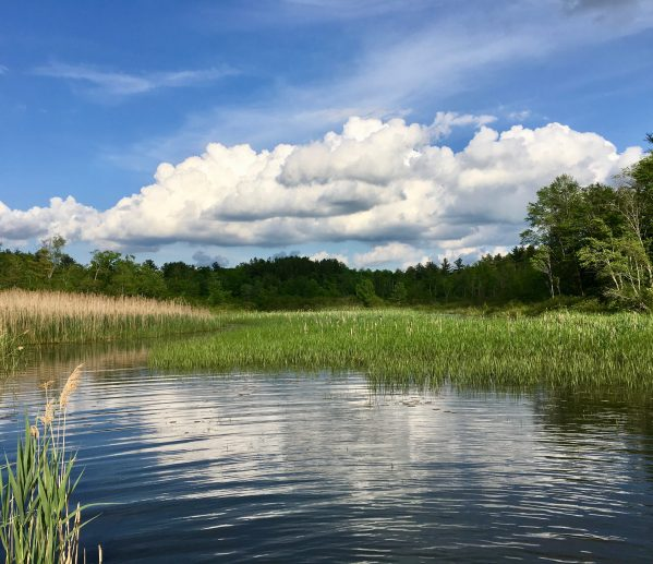 marsh pond photo by gail worley