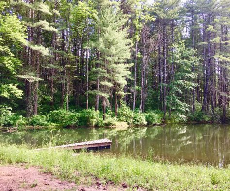 parsons marsh pond photo by gail worley