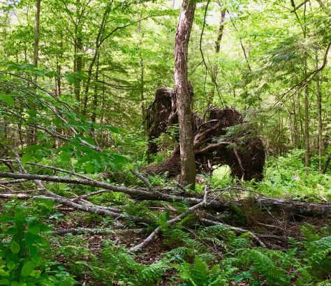 roots of fallen tree photo by gail worley