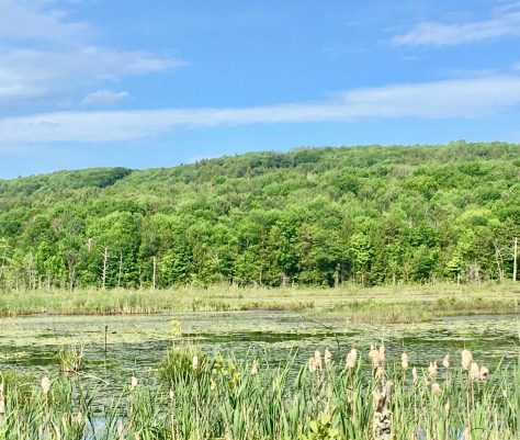 marsh view photo by gail worley