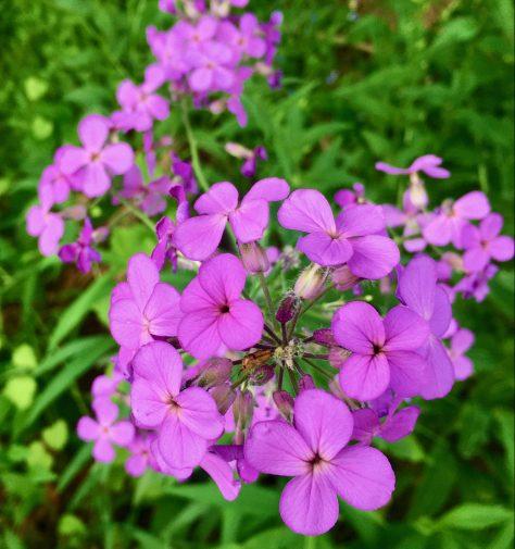 purple flower row photo by gail