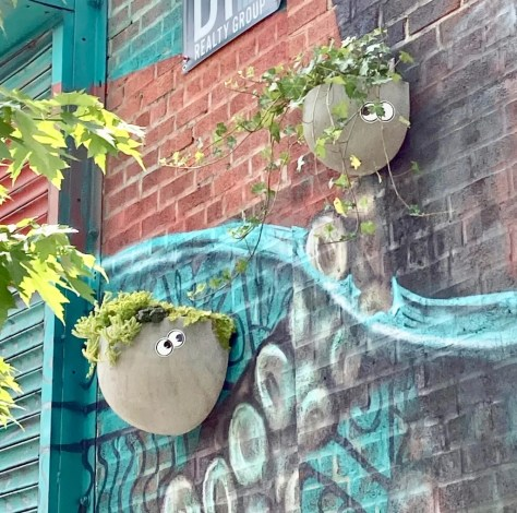 googly eye planters photo by gail worley