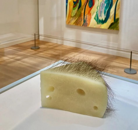 short haired cheese photo by gail worley