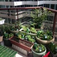 Choosing Containers for your Balcony Garden  WormCompostingTO