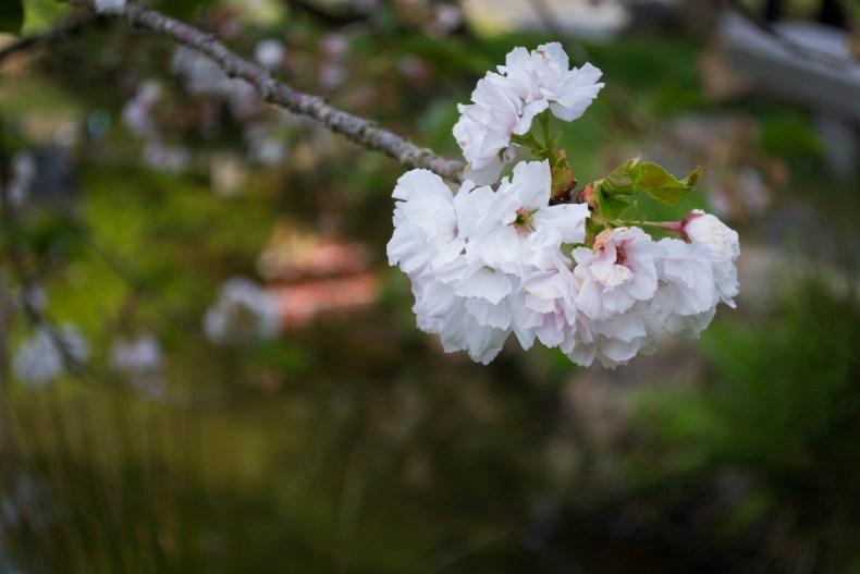 Ce jardin est l'occasion pour moi de refaire des photos de fleur !