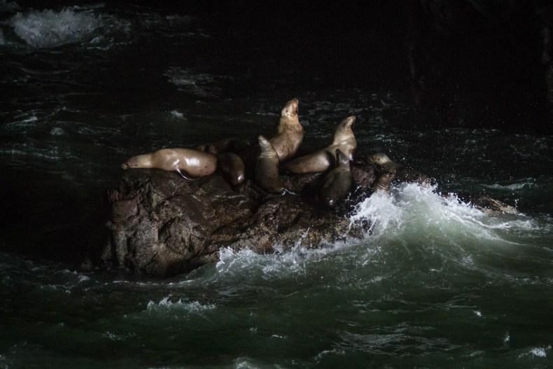 Dans la cave, les lions de mer foisonnent (200 le jour de notre visite)