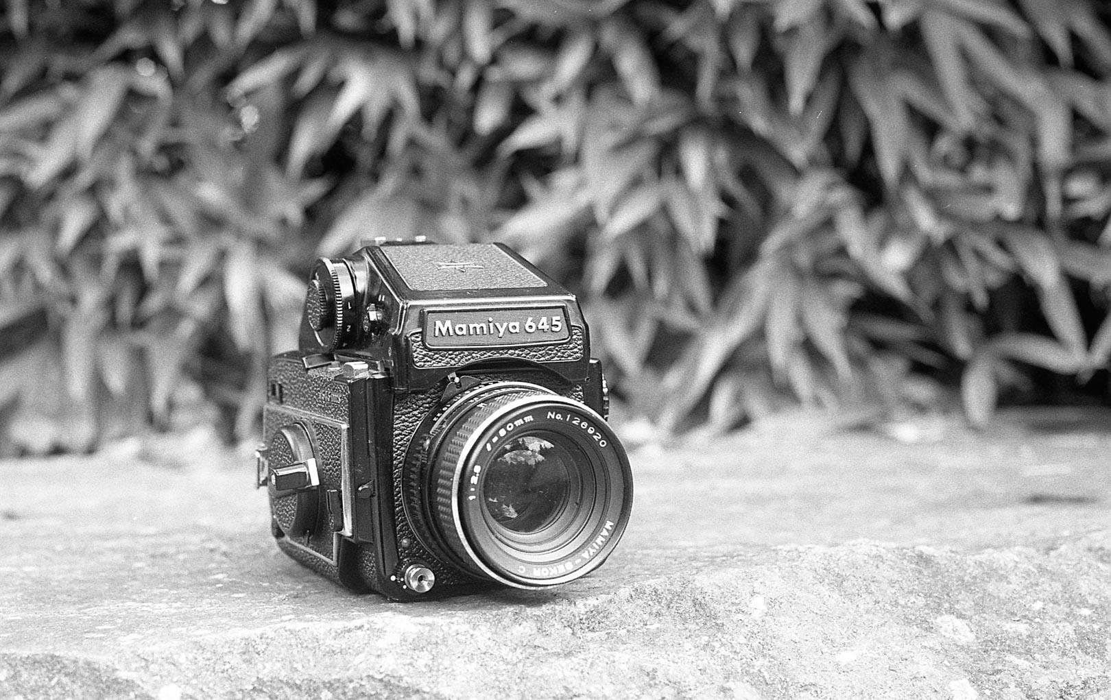 Photo prise avec la Tmax 400 (Kodak) - Scan brut Epson v600