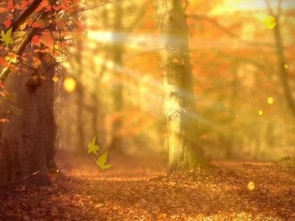 Fall Leaves Pathway Computer Wallpaper Fall Forest Background Life Scribe Media Worshiphouse