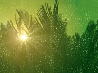 Computer Wallpaper Fall Leaves Palm Sunday Background Videos2worship Worshiphouse Media