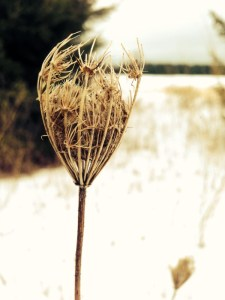 Seed pod,Thandiwe Dale-Ferguson, USA