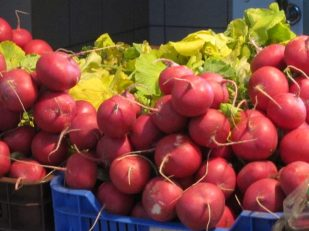 radishes, Budapest, by Ana Gobledale