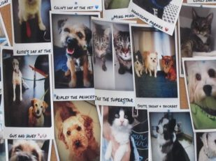 Pet photos, Melbourne, Australia -- by Ana Gobledale