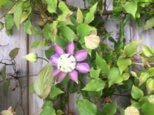 Flower & Vine by Geoffrey Clarke, UK