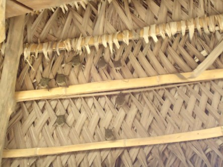 Fledermäuse unterm Dach der Bar