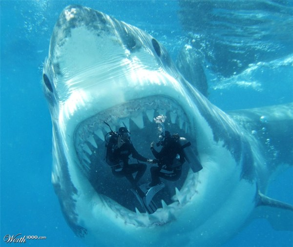 Real Megalodon Sightings - Year of Clean Water