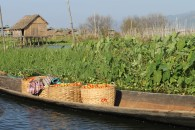 The famous Inle tomatoes en route to market