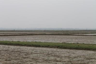 Rice paddies, not yet planted