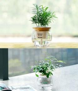 九里香罗汉松水培绿植盆栽