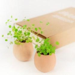 幸运蛋绿植小盆栽