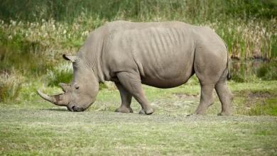 Rhino Slogans